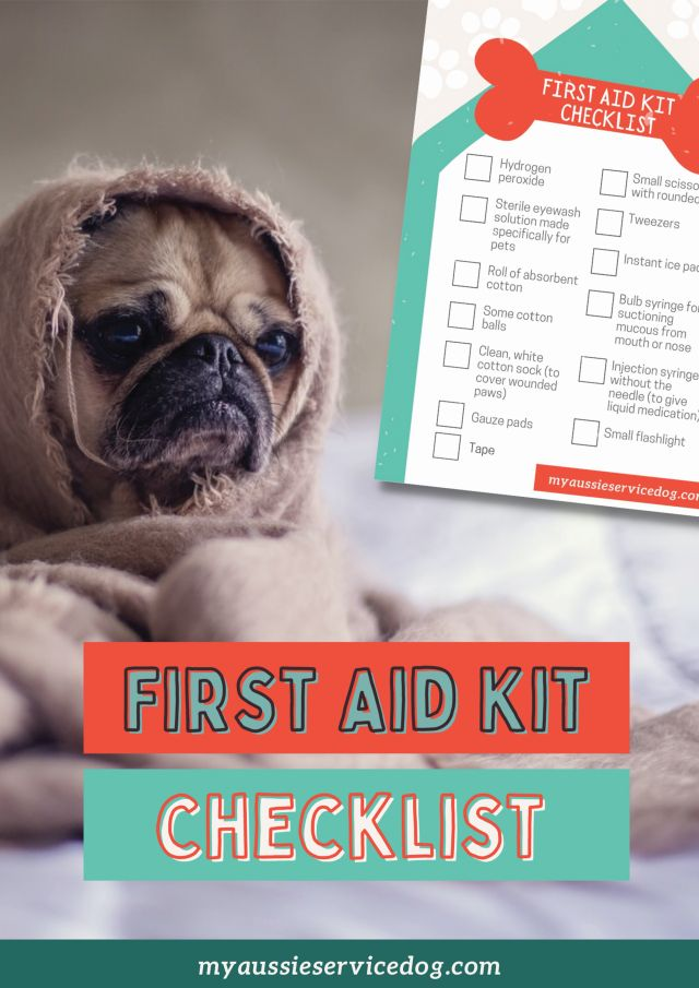 First Aid Tips For Dogs first aid kit checklist