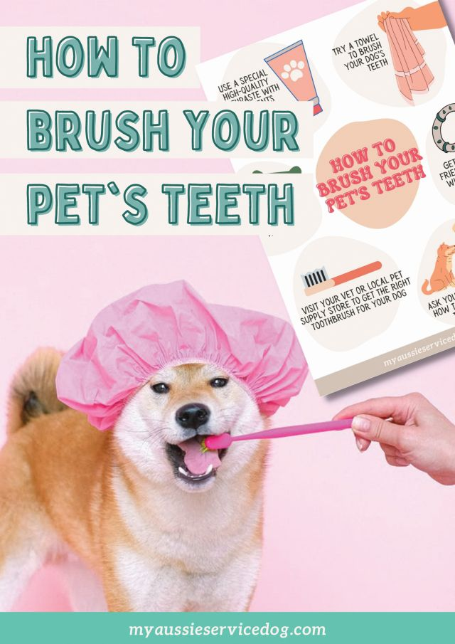 how to bruch your dog's teeth