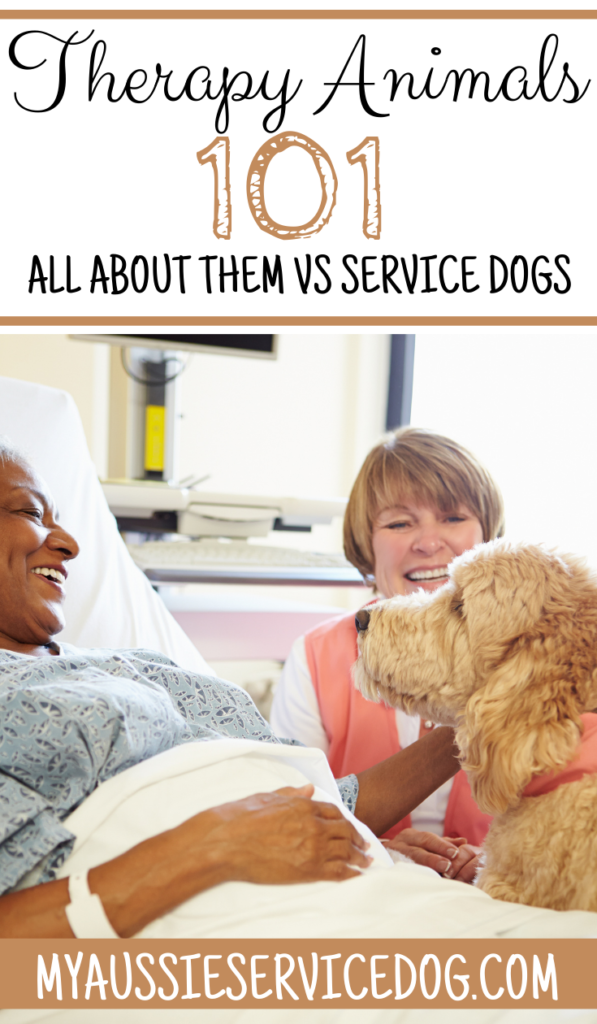 Wonderful Therapy Animals 101: All About Them