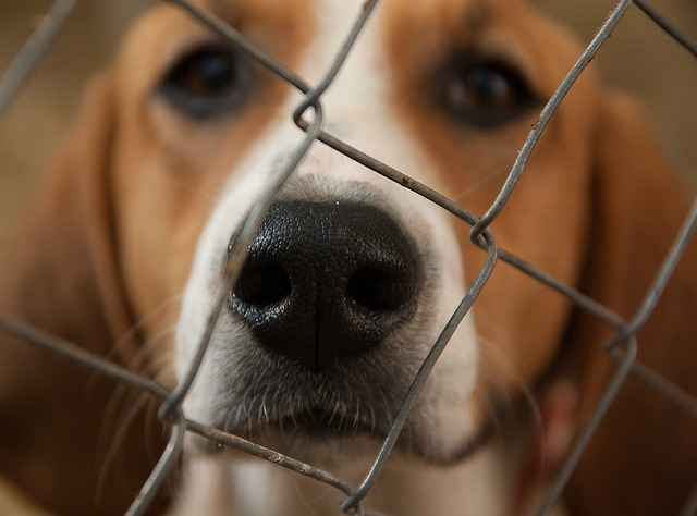 dog confiscated for biting