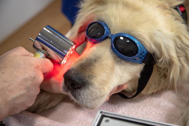 dog dental health check up