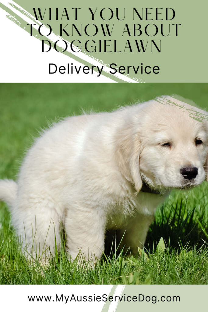 What You Need to Know About DoggieLawn Delivery Service