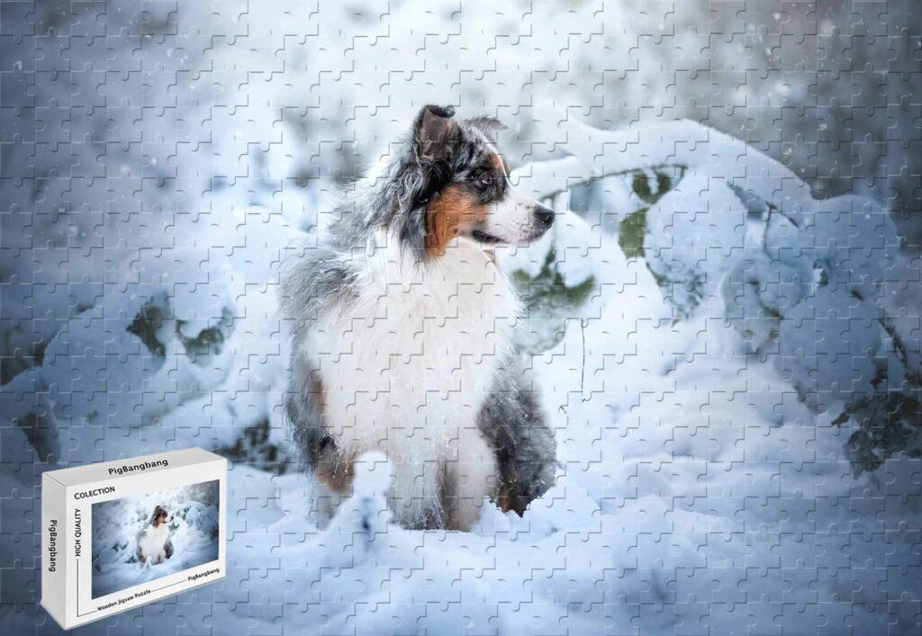 17 Australian Shepherd Gift Ideas for the Dog Lover