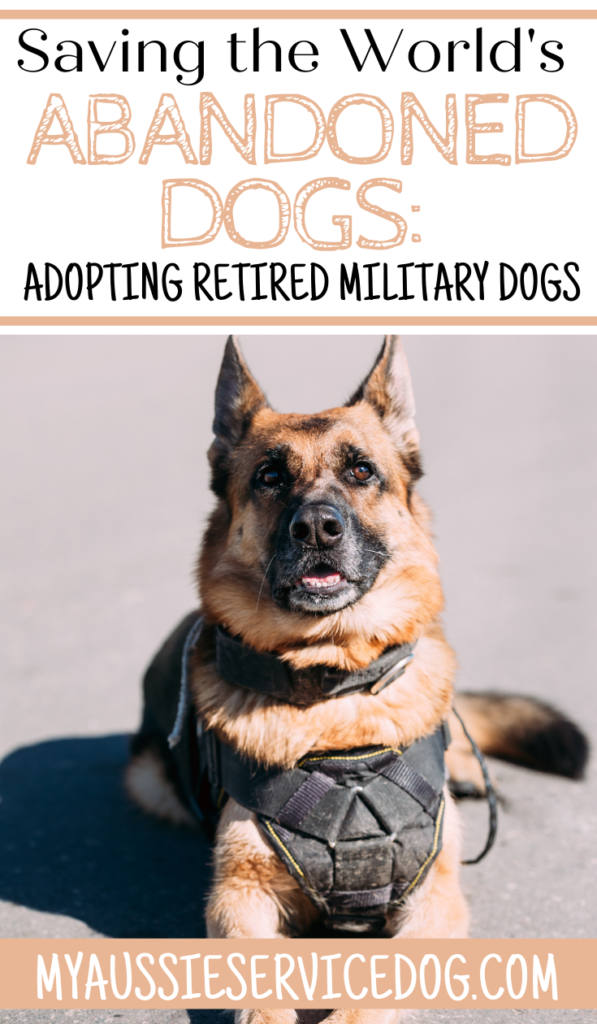Adopting Retired Military Dogs