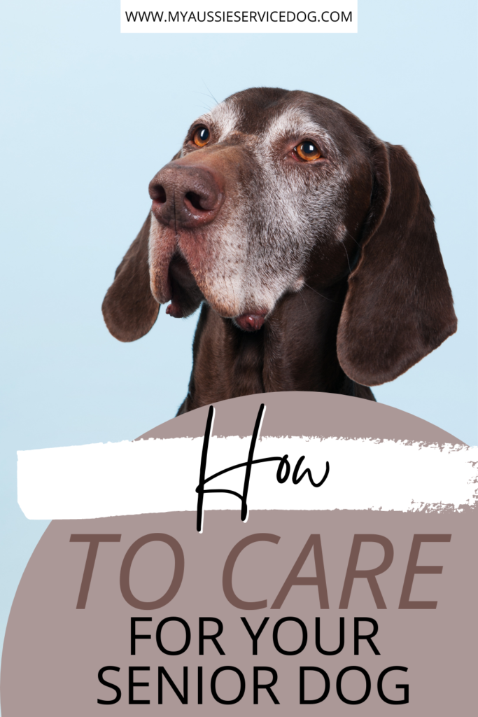 How to Care for A Senior Pet article cover image