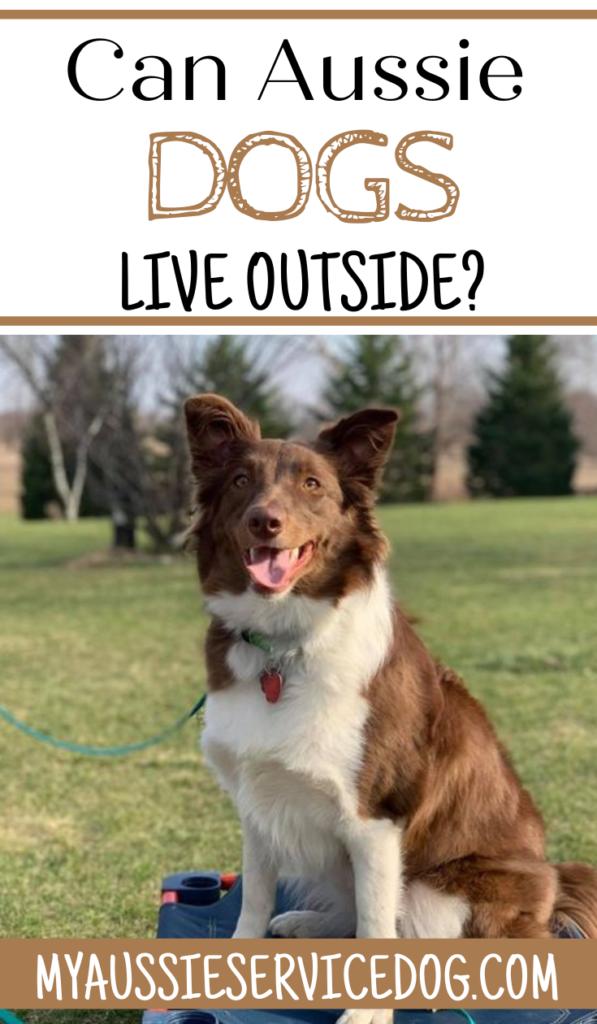Can Australian Shepherd Dogs Live Outside?