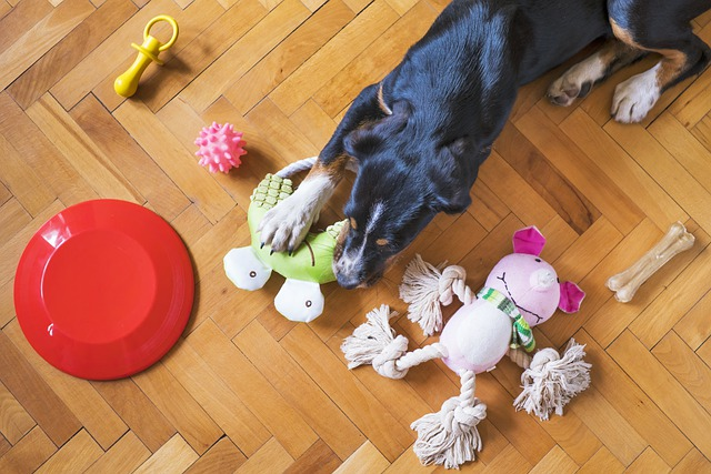 The Best Toys For Dogs That You Can Get