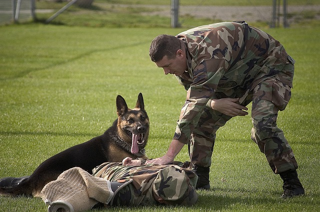 Saving the World's Abandoned Dogs: Adopting Retired Military Dogs