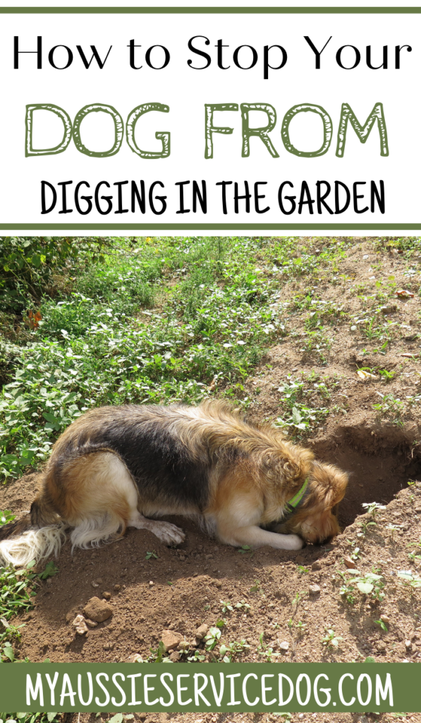How to Stop Your Dog From Digging in the Garden