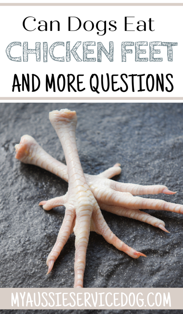 Crazy Things People Search for: Can Dogs Eat Chicken Feet and More!