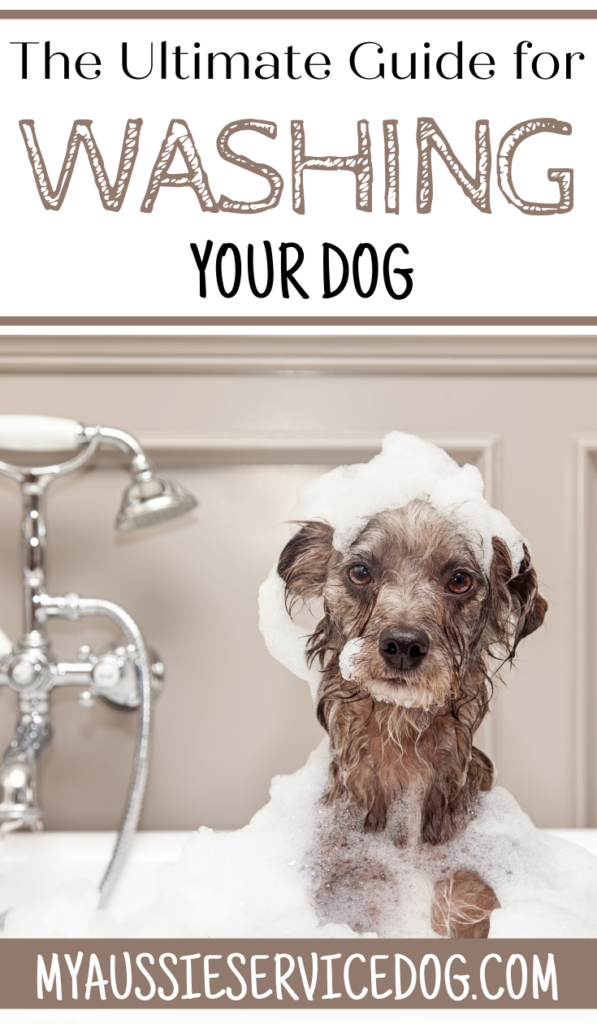 The Ultimate Guide for Washing Your Dog