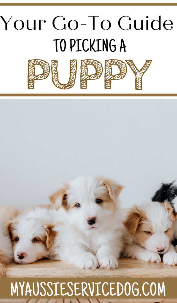 Your Go-To Guide to Picking a Puppy
