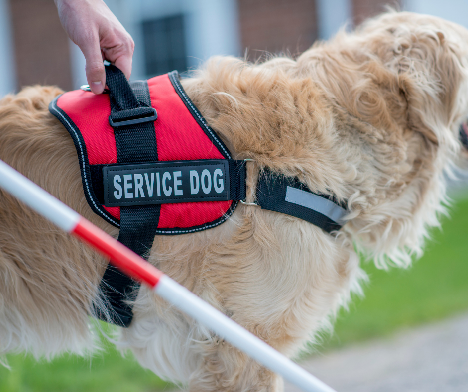 How does petting a service dog distract it?