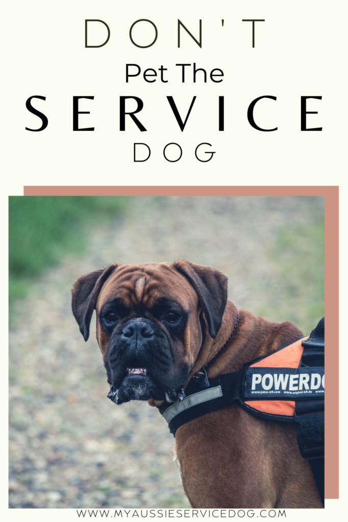 """""""Don't Pet Me, I'm Helping!"""" Why You Don't Pet a Service Dog"""