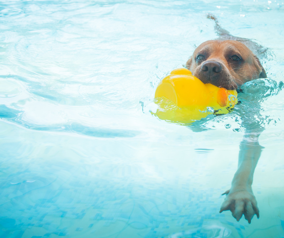 5 Summer Hazards – Keep Your Dog Safe from Injury This Season