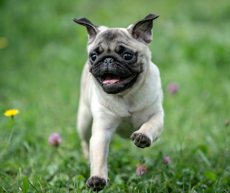 5 Summer Hazards - Keep Your Dog Safe from Injury This Season