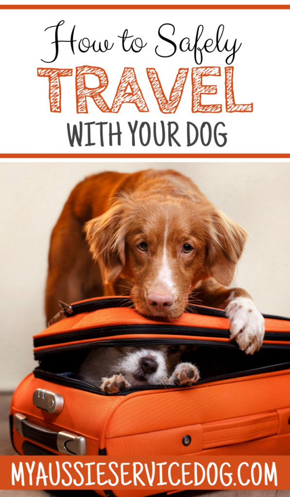 Travel With Your Dog: How to Take Your Pup on Summer Vacation