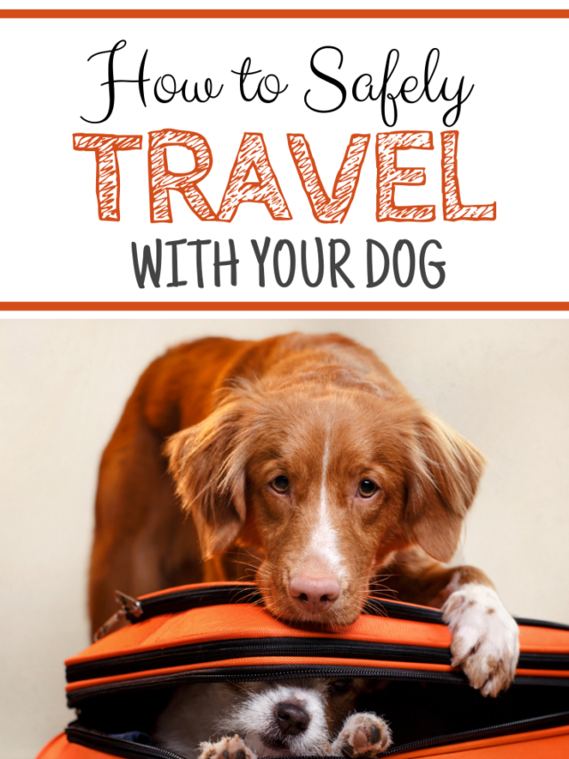 How to Safely Travel With Your Dog