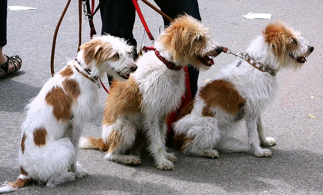 How to Choose the Right Dog Walker for You